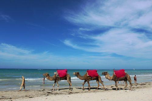 В Тунисе тут и там встречаешь непривычные глазу картины